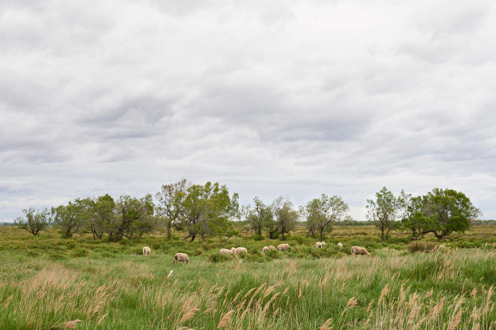 Proximité des marais salant - Arles - 2014