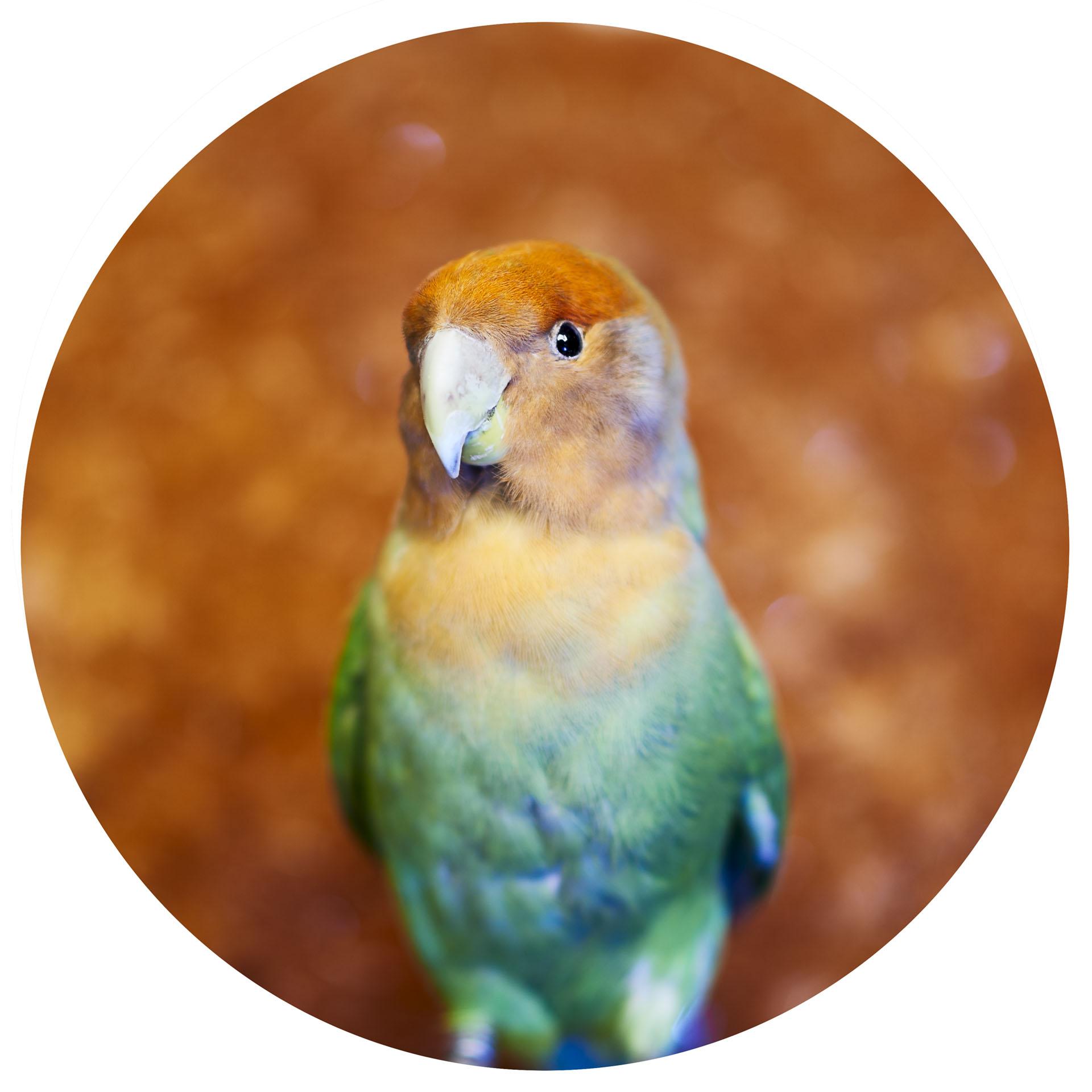 III Little Birds - Novembre 2016